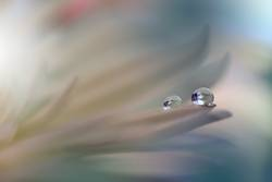 Gentle romantic artistic image. Soft pastel background blur .