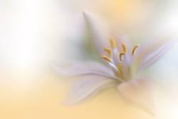 Beautiful Nature Macro Photography.Web Banner for Design.Art.