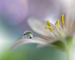 Gentle Romantic Artistic Image.Soft Pastel Background Blur .