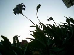 Balkonpflanzen gegen Abendhimmel