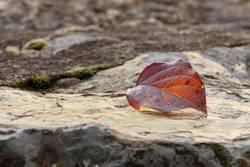 Felsen im Herbst