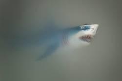 Der Weiße Hai II