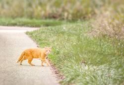 100. - Rote Katze von links bringt Glück :-)