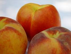 Pfirsiche und Nektarinen