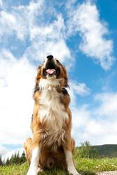 hImmelhund
