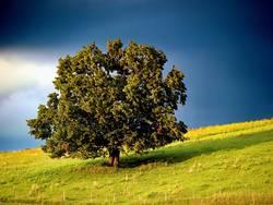 Mein Freund der Baum...