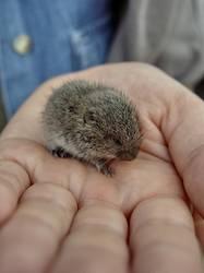 Lemming gefangen ...oder ist es doch ne Maus?