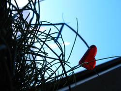 Blick aus dem Blumentopf