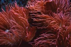 Korallenmeer