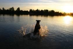 Und Laika sprang in den Sonnenuntergang ...