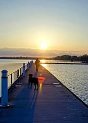 Der Abendhund