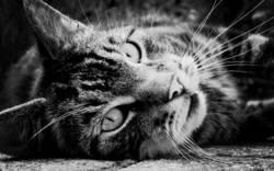 just a cat (3)