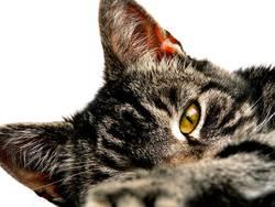 just a cat (2)