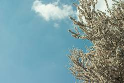 Achtung: Blüten im Umlauf!