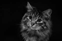 Die Katze und das Butterbrot