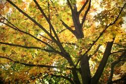 Herbstbaum 2.0