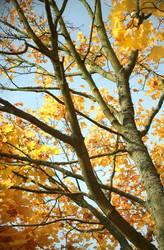 Herbstbaum 1.0