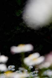 Ufos aus Blumenzuckerwatte