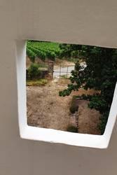 Blick auf Pfälzer Weinbau