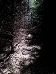 Oden-Wald im Aufbruch