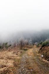 Frostiger Weg