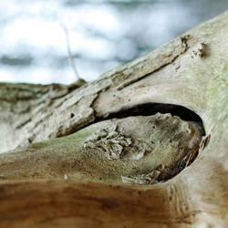 Naturwerk (Holz in Holz)
