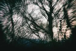 Geheimnisvolle Baumwelt