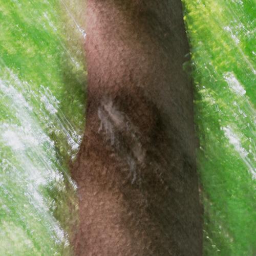 nebulös | ist diese Teilansicht eines Baumes