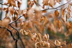 Herbstlich (2/2).