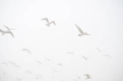 weiß in weiß - Möwen am Himmel