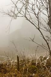 Haus im Nebel