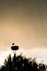 alleinerziehender Storch