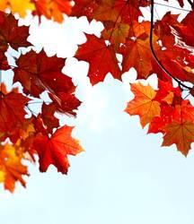 Wer wird denn gleich rot werden - Herbsttag