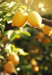 Orange Garden XIII