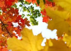 Verlauf des Lebens - Herbsttag