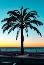 Nice Palmtree