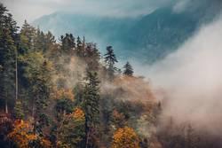 Foggy Mountain Woods
