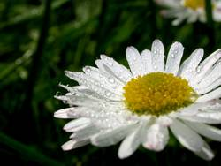 Frühlingstau