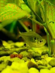 fishe im Aquarium