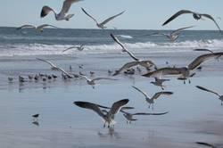 daytona beach 01