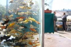 Fish aquarium on a market