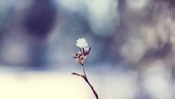 Winter Snow Flower