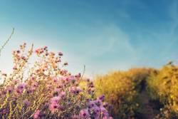Ein Feldweg mit Blumen im Sonnenuntergang