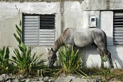 Pferd auf dem Flur