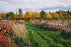 Autumn meadow with grass near the forest