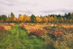 Ein Feld in der ländlichen Landschaft