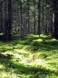 Schwedenwald