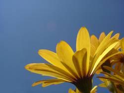 Blume vs. Himmel