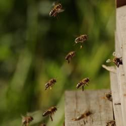 Kuschelgruppe   Bienenschwarm