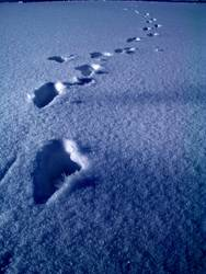 Spuren im Schnee #1
